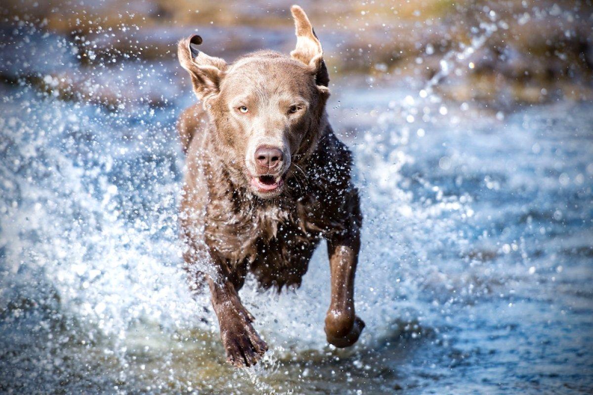 Lidi Ferraresi con il cane: guida per una vacanza dog friendly